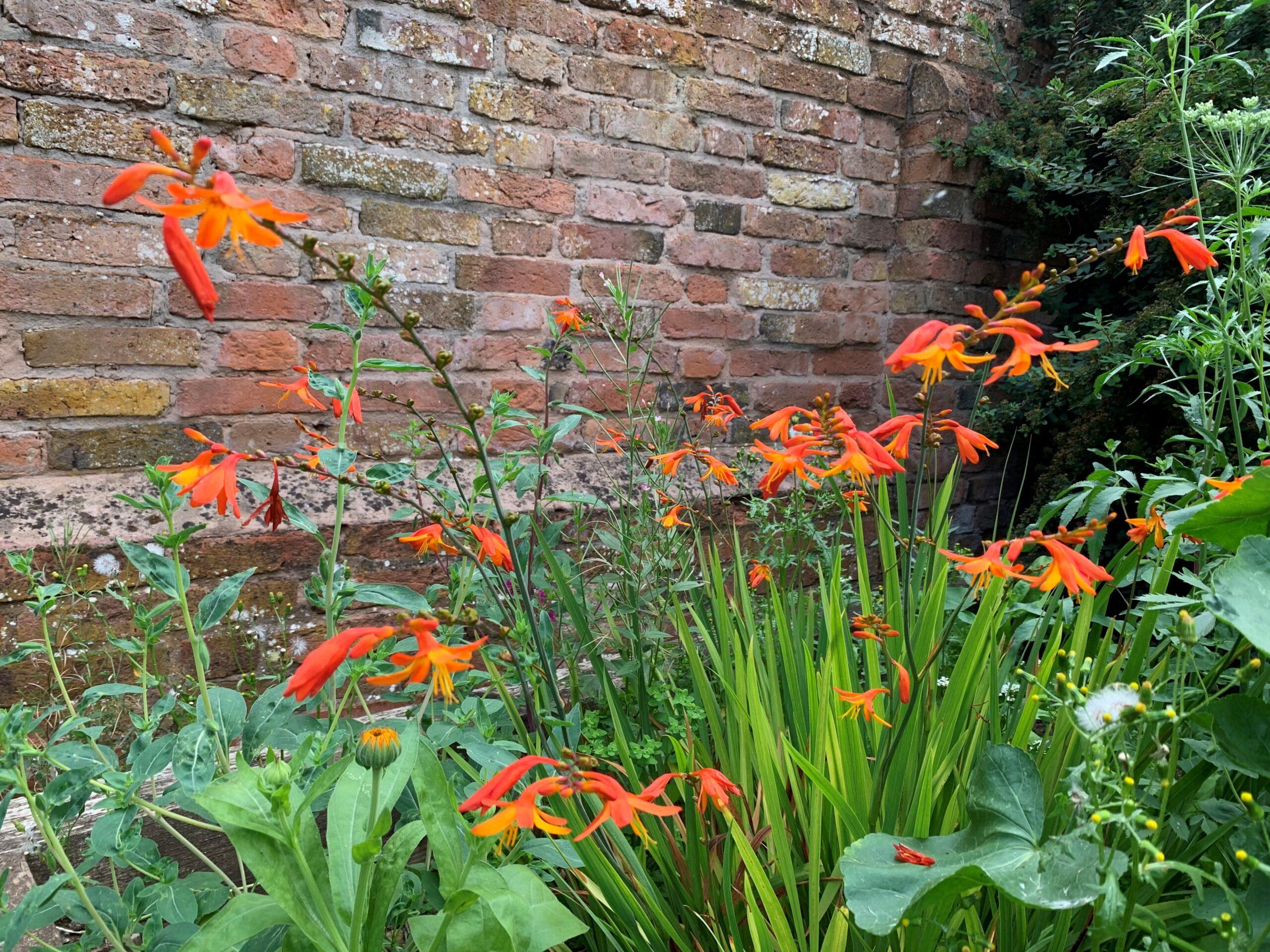 Volunteer Ollie's wildflower garden at Reach Southwell